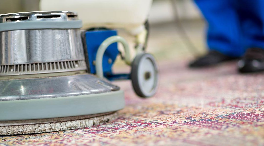 What's lurking in your carpets?